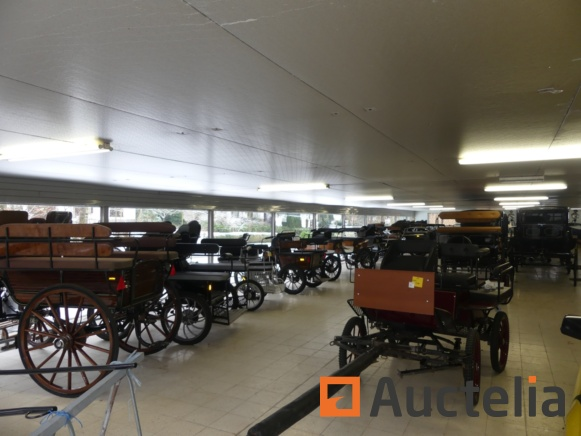 New horse carriages and equipment BTP